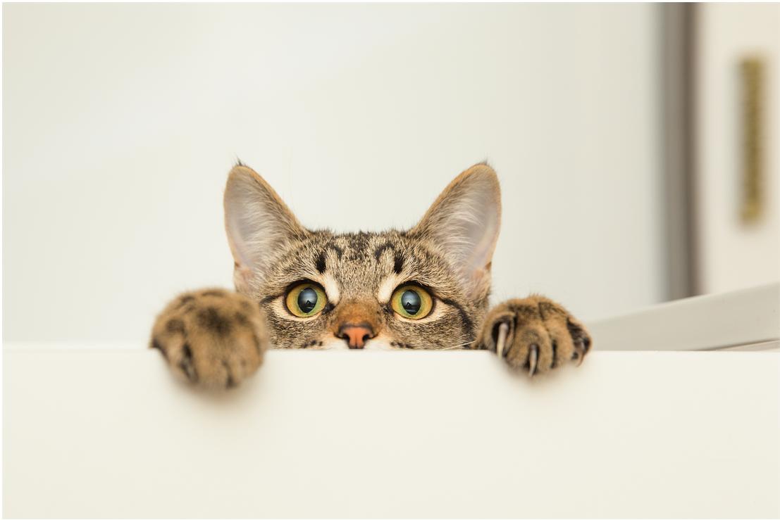 猫向けIoTデバイス Web広告用動画制作